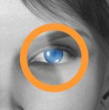 Kontaktlinsen im Kontaktlinsenversand Preisvergleich